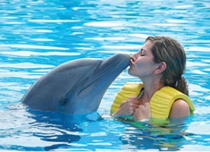 Blog---Dolphins (1)